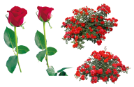 red roses with leaves free png download