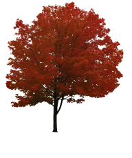 Red Tree Png Free