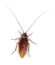 Roach PNG Free Download 17