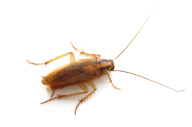 Roach PNG Free Download 22