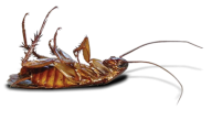 Roach PNG Free Download 23