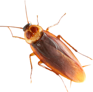 Roach PNG Free Download 24