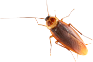 Roach PNG Free Download 25