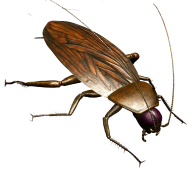 Roach PNG Free Download 28