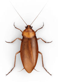 Roach PNG Free Download 7