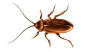 Roach PNG Free Download 9