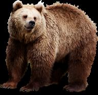 Sad Bear Png Image