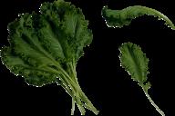Salad PNG Free Download 13