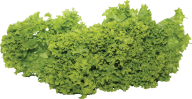Salad PNG Free Download 14