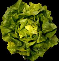 Salad PNG Free Download 17