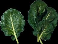 Salad PNG Free Download 2