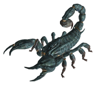 Scorpion PNG Free Download 13