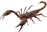 Scorpion PNG Free Download 14