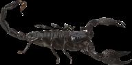 Scorpion PNG Free Download 22