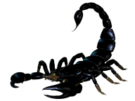 Scorpion PNG Free Download 24