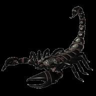 Scorpion PNG Free Download 26