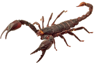 Scorpion PNG Free Download 7