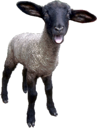 Sheep PNG Free Download 1