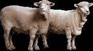 Sheep PNG Free Download 10