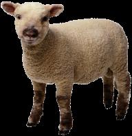Sheep PNG Free Download 13