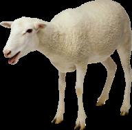 Sheep PNG Free Download 17