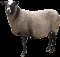 Sheep PNG Free Download 18