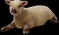Sheep PNG Free Download 19