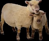 Sheep PNG Free Download 4