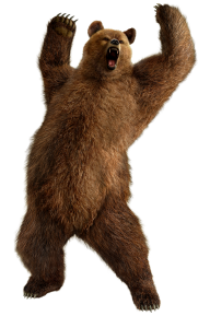 Shouting Bear Png Image