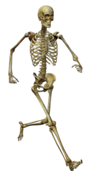 Skeleton PNG Free Download 1