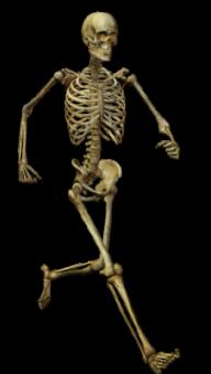 Skeleton PNG Free Download 1