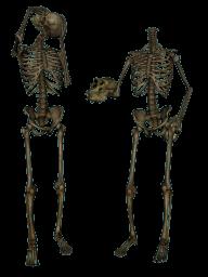 Skeleton PNG Free Download 10