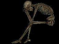 Skeleton PNG Free Download 12