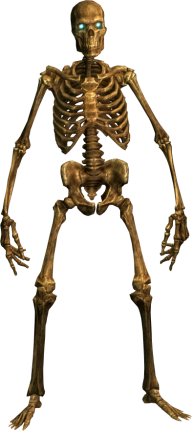 Skeleton PNG Free Download 18
