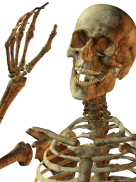 Skeleton PNG Free Download 19