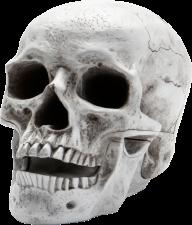 Skeleton PNG Free Download 2