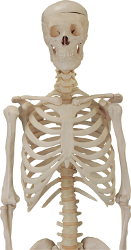 Skeleton PNG Free Download 21