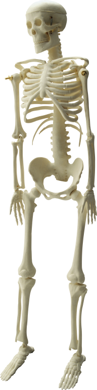 Skeleton PNG Free Download 24