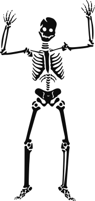 Skeleton PNG Free Download 29