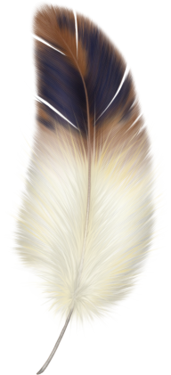 Sketched Feather Png Downlload