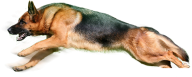 Sleeping Dog Png