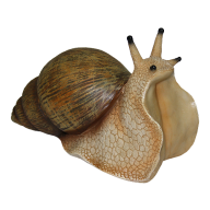 Snails PNG Free Download 1