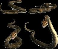 Snake PNG Free Download 1