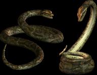 Snake PNG Free Download 10