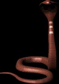 Snake PNG Free Download 11