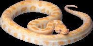 Snake PNG Free Download 13