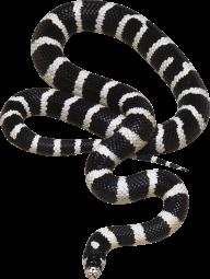 Snake PNG Free Download 14