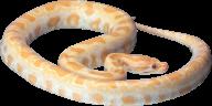 Snake PNG Free Download 15