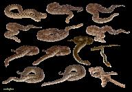 Snake PNG Free Download 2