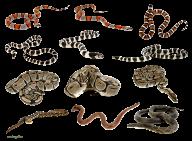 Snake PNG Free Download 3